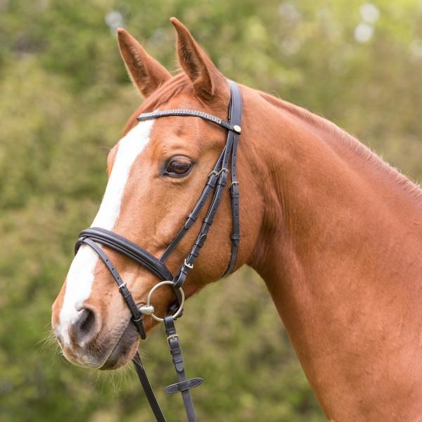 Trensenzaum Valencia Horse & Passion