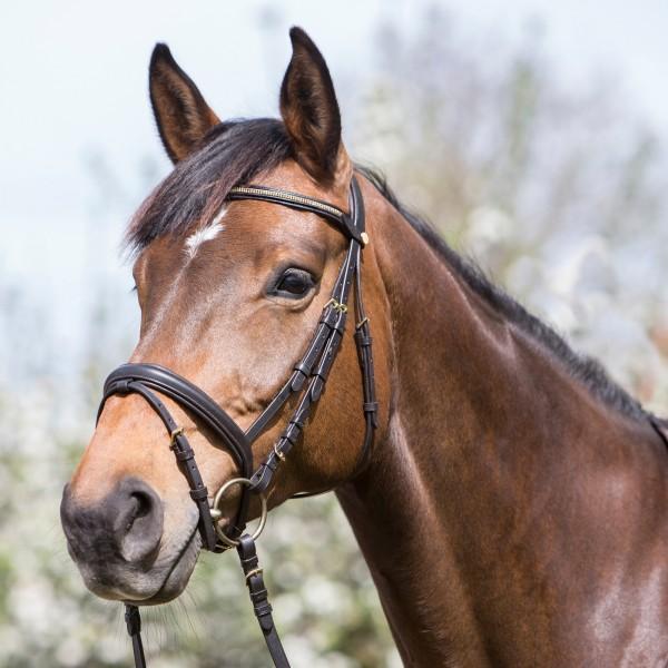 Trensenzaum Myra Horse & Passion
