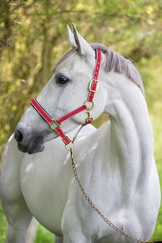 Nylonhalfter EXCLUSIV Kerbl für die Pferdeklappe