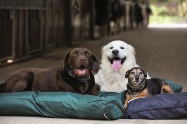 Rambo Pillow Dog Bed Horseware