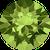 228-olivine